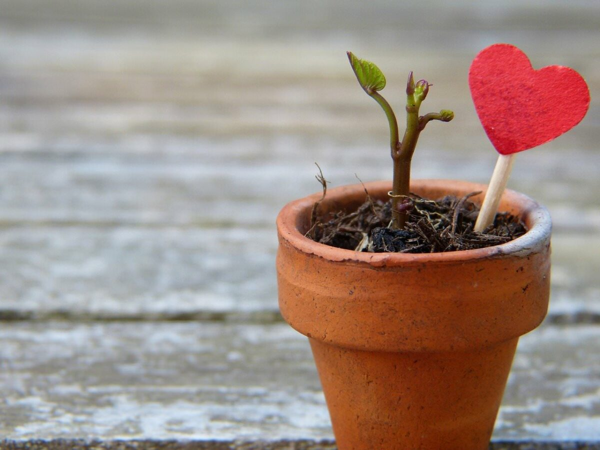 new growth potted plant with red heart